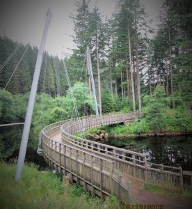 Beautiful Millenium Bridge Kielder